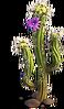 Res cactus 3