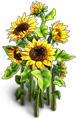 Sunflower plant.png
