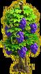 Grapes plant ph4