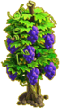 Grapes plant ph4.png