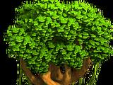 Tree with a Liana