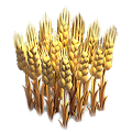 Wheat plant.png