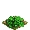Strawberry plant ph1.png