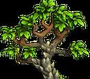 Fossilized Tree