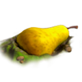Res giant pear 1.png
