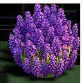 Res lavender bush 1.png