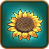 Adv-Sunflower