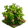 Raspberry plant ph3.png
