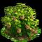 Raspberry plant ph3