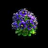 Res violets 1