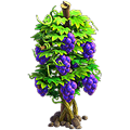 Grapes plant.png