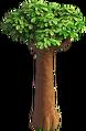 Res baobab tree 1.png