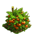 Tomatoes plant ph4.png