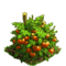 Tomatoes plant ph4