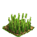 Wheat plant ph2.png
