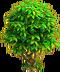 Lemon tree ph3