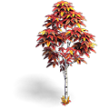 Res birch red 2.png