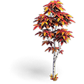 Res birch red 1.png