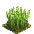 Wheat plant ph3.png