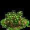 Lanterns plant ph2