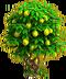 Lemon tree ph4