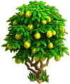 Lemon tree ph4.png
