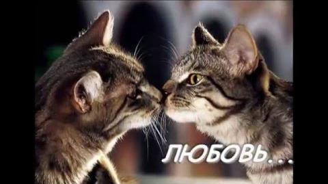 """Буктрейлер """"Коты-Воители"""""""