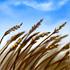 Fertile Winds-icon