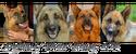 Собаки, играющие Рекса