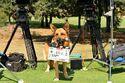 Вой собаки (съёмки) 2