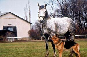 Лошадь, стоящая миллионы 1