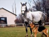 Лошадь, стоящая миллионы