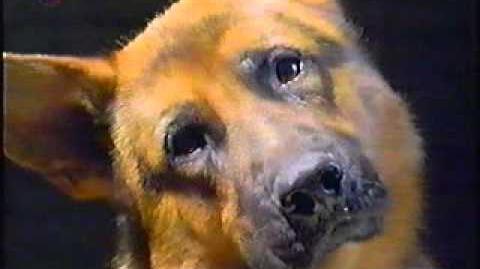 Kommissar Rex ist wieder da!Reklamefilm von Sat 1 1997