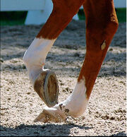 350 Horse-Legs-for-web