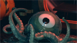 One eyed Octopus