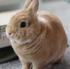 Cute-rabbit copy
