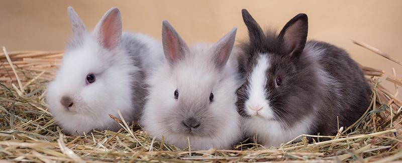 konijnen namen | konijnen wiki | fandom poweredwikia