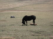 Black Mare and Foal by solarka stock