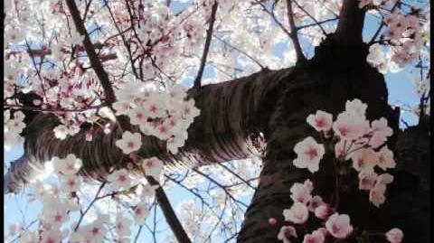 Kormorán - Fa leszek, ha fának vagy virága (Petőfi Sándor)