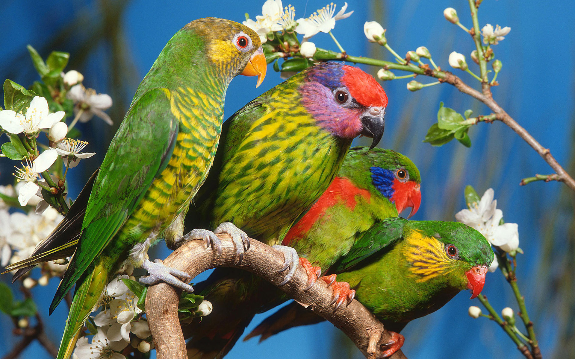 image - wallpaper-animals-parrots-hd-picture-high-quality-wallpaper