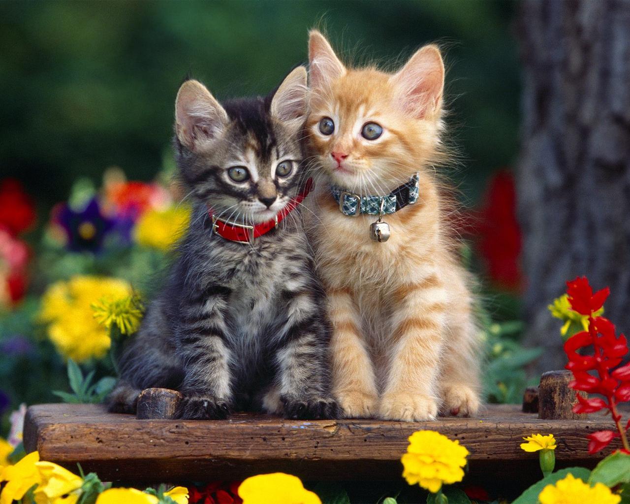 image - 1265530724 cats-wallpaper-cats-5194876-1280-1024 | koror