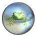 Frog Kororinpa