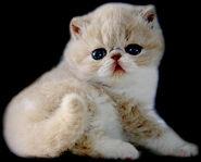 The-exotic-cat5
