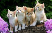 Four-Funny-Cat1