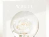 White (THE BOYZ)