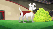 Krypto DC Super Hero Girls TV