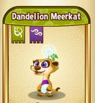 DandelionMeerkatBaby