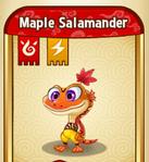 MapleSalamanderBaby
