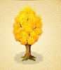 YellowPoplarTree