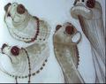 Oogway-marlet-art-2.png